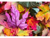 Herbstliche Werbeartikel | © Pixabay